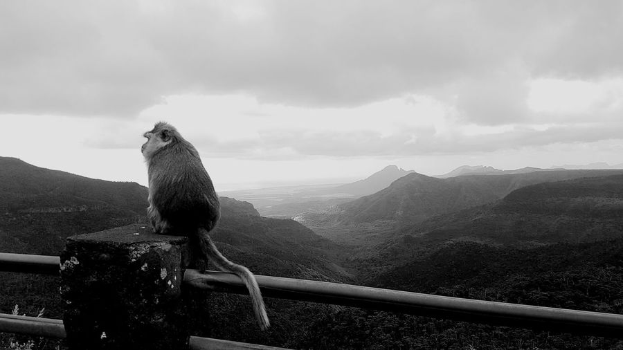 Monochrome Photography Sky Tranquility Nature Vacations Samsung Galaxy S7 Edge Mauritius Animals In The Wild Wildlife Monkey TheWeekOnEyeEM Animals Black And White