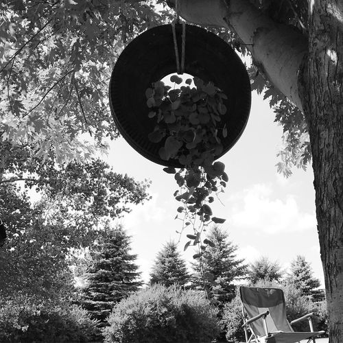 Tire Swing Swing Tire Tree Hanging Low Angle View Day No People Growth Outdoors Branch Lantern Nature Plant Leaf
