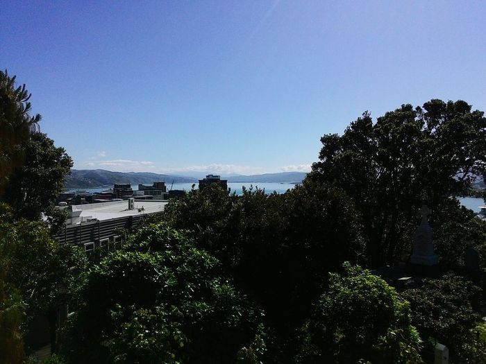 Welcome To Wellington all the people coming for a holiday this is the normal Wellington Day! Wellybrag Windlesswellington Summertimefine