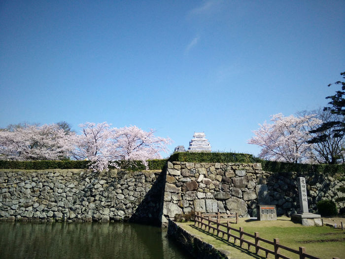 Himeji Castle Architecture Blue Built Structure Castle Cherry Blossoms Clear Sky Day Himeji Himeji Castle In Bloom Japan Outdoors Sakura Sky Travel Travel Destinations Travel Photography Traveling Tree