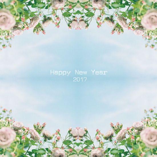 今年もマイペースですが宜しくお願いします。 Flower Film Photography PENTAX67 Pro400H