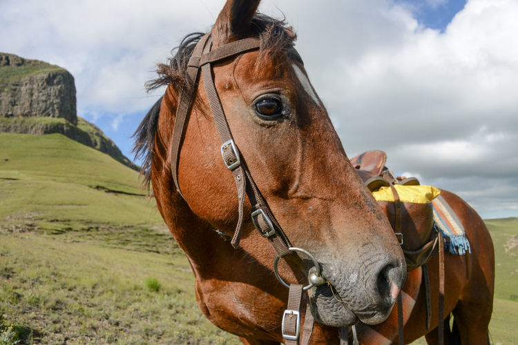 Close-up of horse standing on field against sky