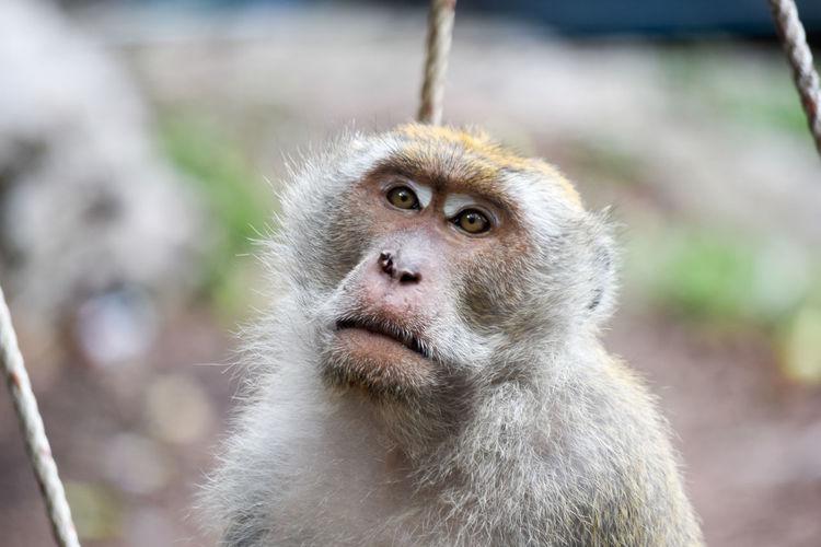 Animal Animal Wildlife Day Mammal Monkey One Animal Widelife