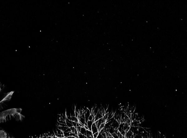 Night Star - Space Astronomy Nature Constellation No People Beauty In Nature Sky Outdoors Scenics Galaxy Winter Star Field Tranquility Landscape Snow Cold Temperature Space Bare Tree Space Exploration Live For The Story