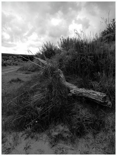 Cloud - Sky Nature Grass Outdoors Growth Beauty In Nature Light And Shadow Wooden Fallen Tree Trunk Texture Black And White Photography