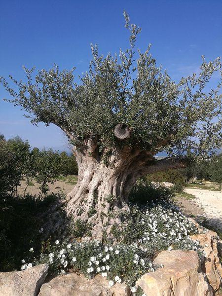 Tramonti__italiani Tree Tranquil Scene Huawei P 9
