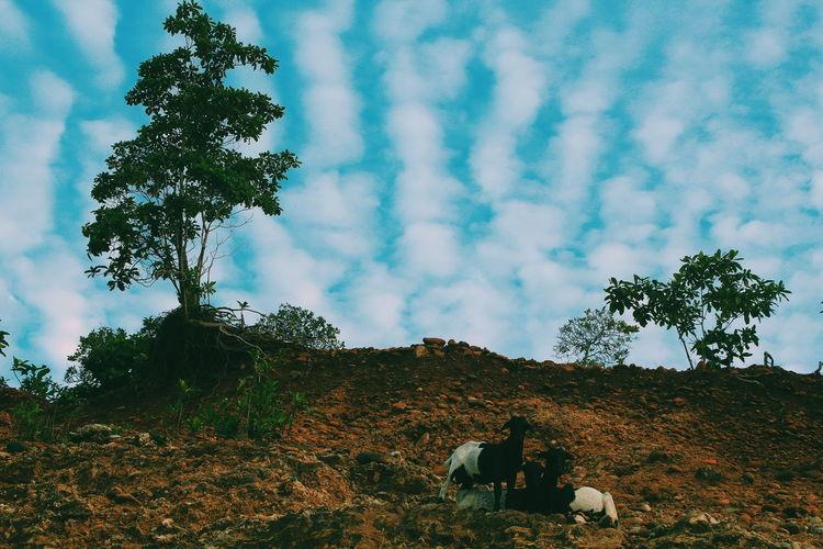 Goats on mountain against sky