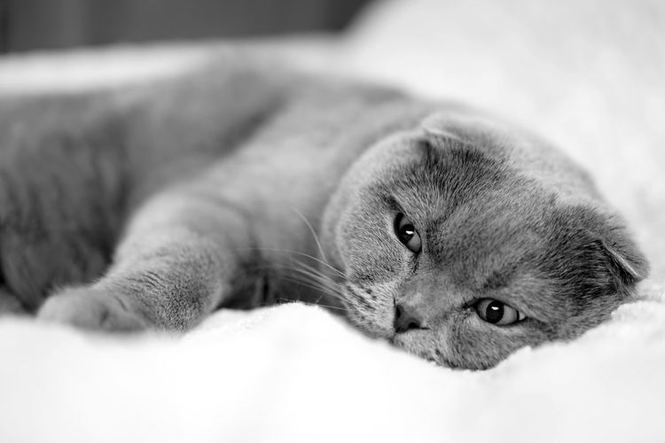 Cat Cats Cat