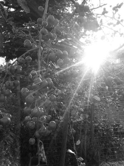EyeEm Nature Lover Eye Em Nature Lover EyeEm Best Shots - Black + White Blackandwhite Photography Black&white Garden Sunshine Taking Photos Nature Creative Light And Shadow