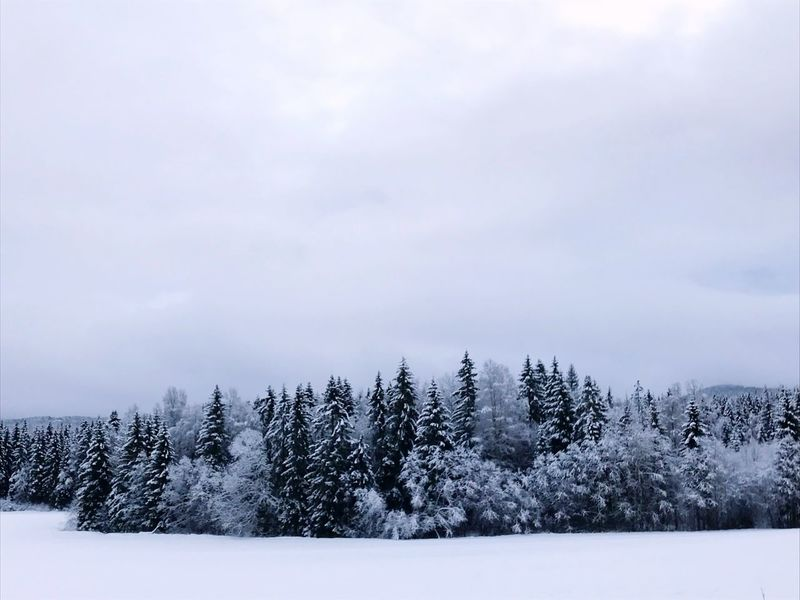 Scandinavian skies Norway Snow Cold Temperature Winter Nature Tranquil Scene Beauty In Nature Weather Tranquility No People Landscape Cloud - Sky Tree Outdoors Sky Day Scenics
