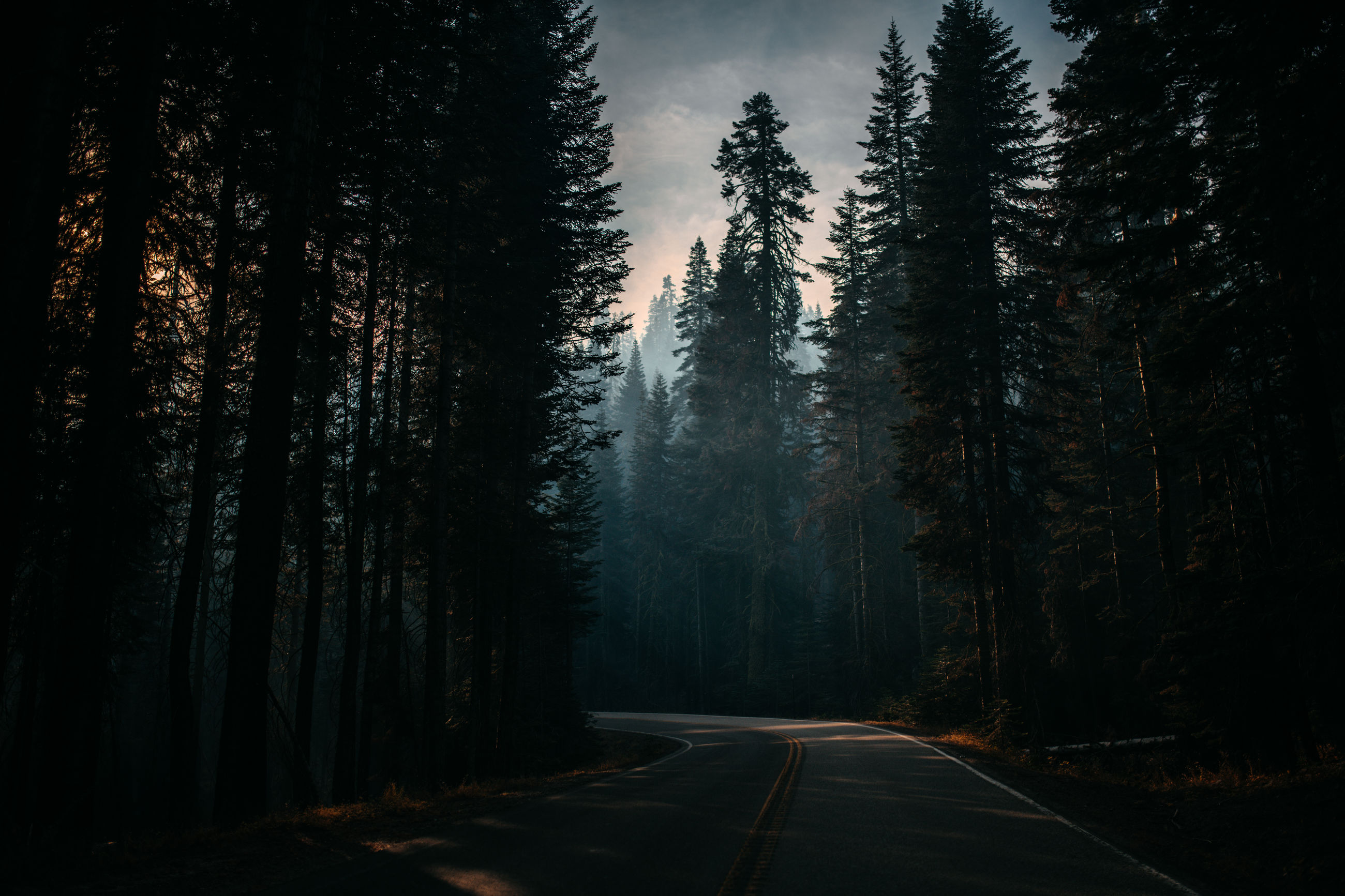 tree, forest, plant, road, direction, the way forward, nature, land, beauty in nature, tranquility, no people, tranquil scene, woodland, transportation, marking, road marking, sign, symbol, non-urban scene, diminishing perspective, dividing line, long