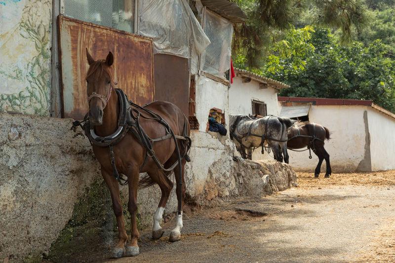 Horses standing on street