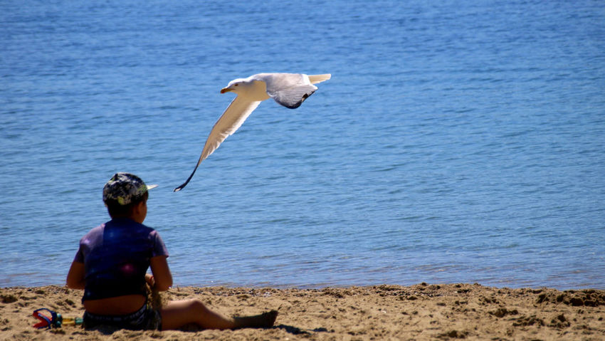 One Animal Animals In The Wild Real People Animal Wildlife Men Bird Outdoors Water Day Sea One Person Nature Mammal EyeEmNewHere Le Var Blue Beach
