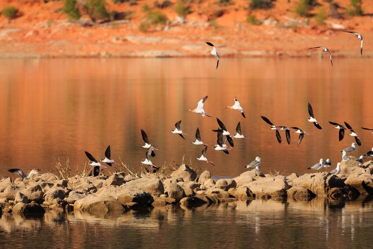 Birds flying above reservoir at gunlock state park