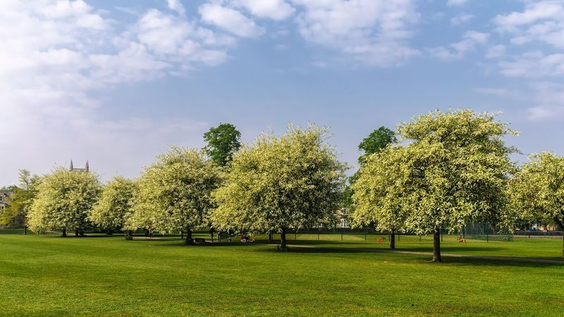 Full bloom trees Environment Green Color Growth Sky Grass Outdoors Beauty In Nature Nature Tree Cloud - Sky Day No People Tranquility Park - Man Made Space Scenics
