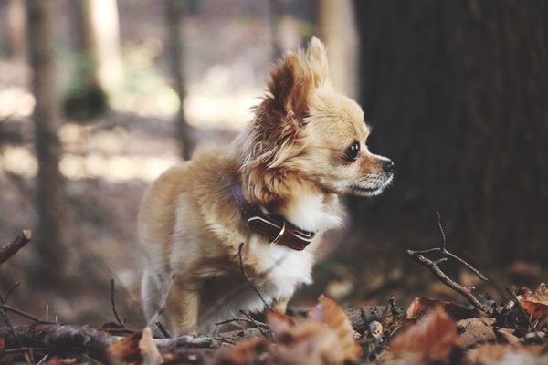 Into the forest 🌳🌲🍃 Dog Animal Themes Domestic Animals Pets One Animal Mammal Day No People Outdoors Nature Close-up EyeEmNewHere