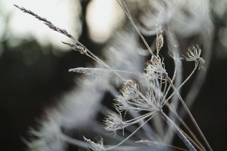 frozen world Winter Wintertime Frost Frosty Mornings Frozen Nature Frozen Frozen Photography Nature Photography Beauty In Nature Focused Focus My Point Of View Reinheimer Teich Complexity Close-up Flower Head Plant Life Weather Condition