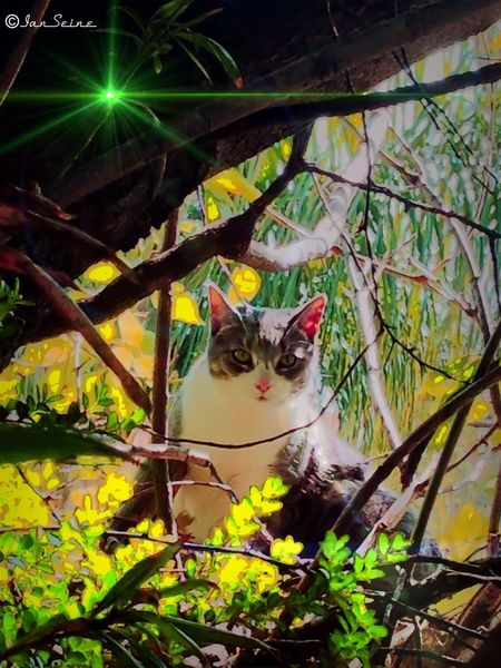 """✨✨This is Ashley climbing trees and being elusive. For any of you in the Find the Cat picture before, this is the one """"missing"""" cat!!✨✨ Cats Eye4photography  Eye4enchanting For The Love Of Trees ~"""