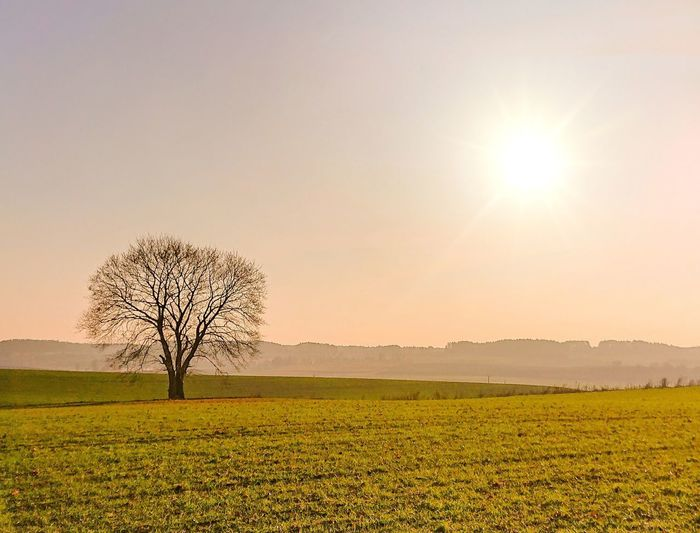 Sunset Sunset Lonely Lonely Tree Polska Poland Autumn Nature Sunset Trees  Masuria Trees And Sky Sunset Lovers XPERIA Xperiaxz3