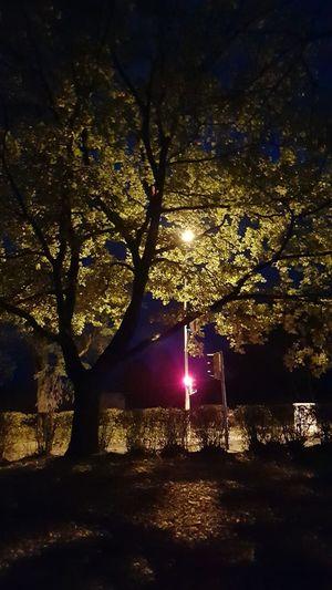 Tree Tree In The Dark