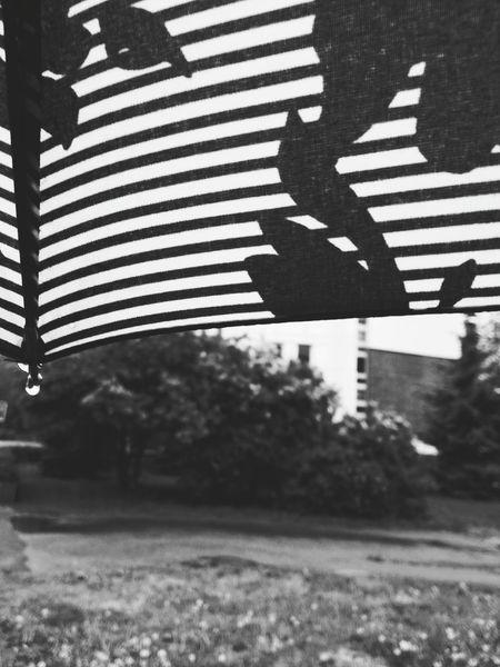 Drop Rain Drops Rain Umbrella Дождь дождь☔ капля зонтик