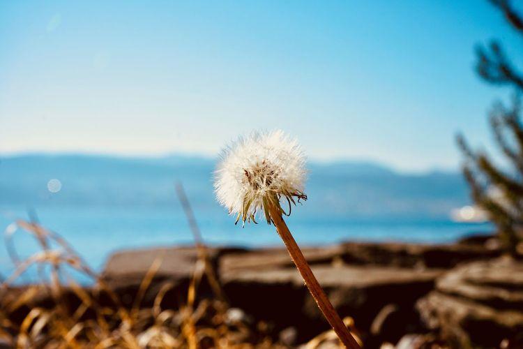 Close-up of dandelion on land against sky