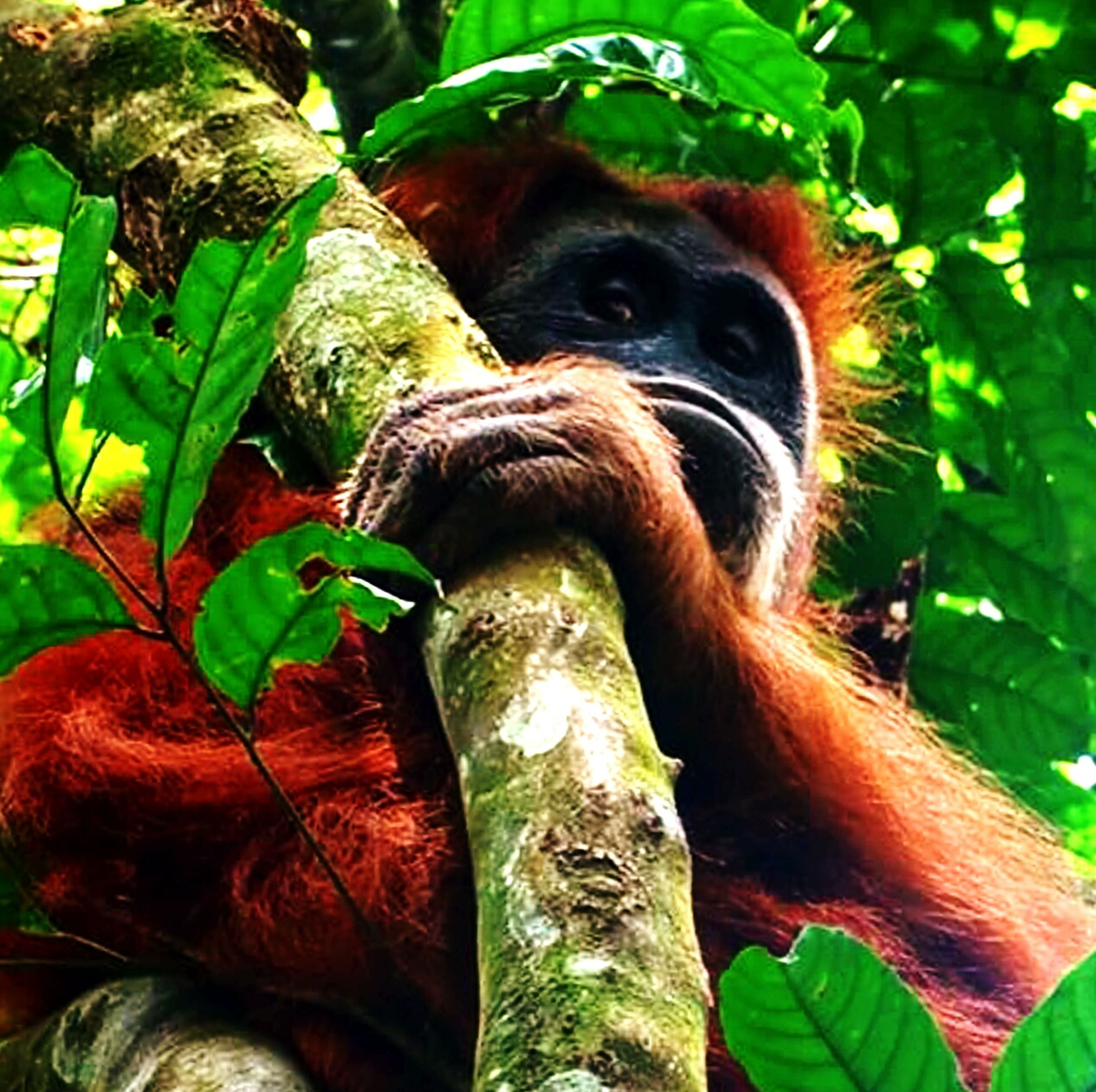 animal themes, one animal, leaf, mammal, tree, close-up, green color, wildlife, plant, low angle view, branch, sitting, growth, monkey, nature, animals in the wild, outdoors, no people, day, focus on foreground