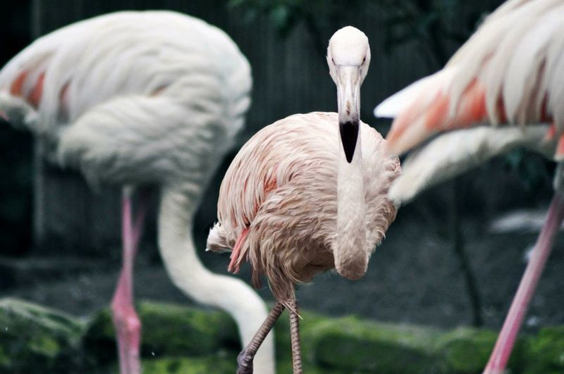 Flamingos Perching Outdoors