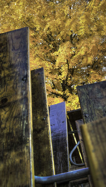 Autumn Close-up Day Deterioration Gold Nature No People Outdoors Picnic Tables Selective Focus