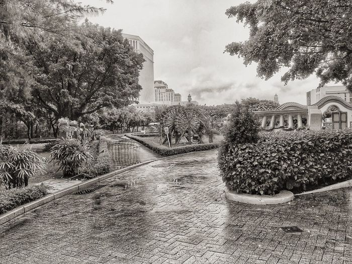 All shapes and sizes Blackandwhite Nature On Your Doorstep Taipa  Macau Park - Man Made Space Adapted To The City Photography Scenics Cloud - Sky Tree Growth Built Structure Building Exterior Architecture Nature Sky Day No People Beauty In Nature Outdoors Plant City