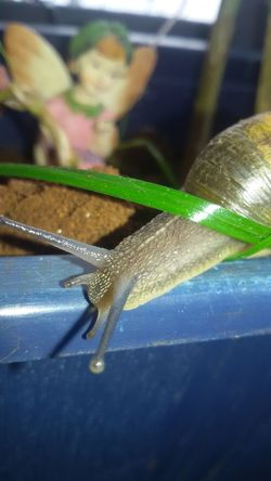 Insect Close-up Snail Animal Antenna Shell Slow Crawling Antenna Mollusk Slug Gastropod Invertebrate Animal Shell