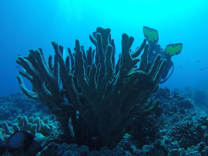 Coral Hawaii Kona Ocean Ocean View UnderSea