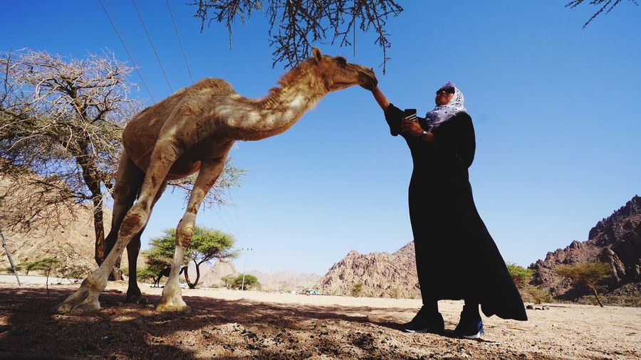 Low Angle View Of Woman Petting Camel At Desert