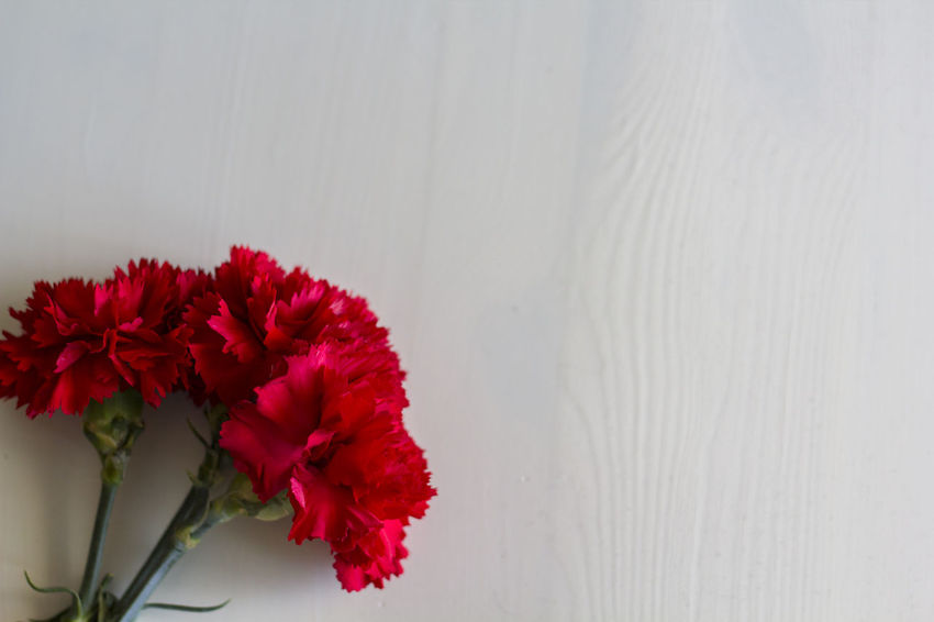 Carnations on white wooden background Carnation Dianthus Caryophyllus Elégance Love Revolution Romance Valentine Beauty In Nature Carnation Flowers Concept Copy Space Floral Flower Flower Head Nature Red Top View