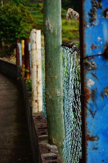 Fence Plant No