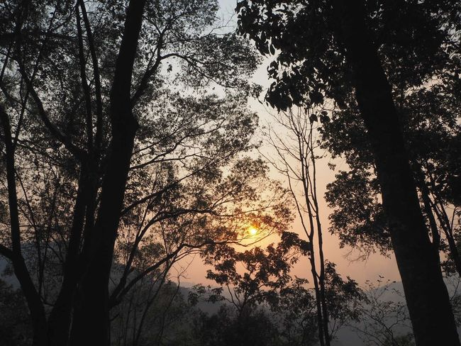 Forest Forest Photography Sunset Evening Sun Mountain Nature Nature_collection Nature Photography Sunset_collection Beautiful Beautiful Nature Tree Tree_collection