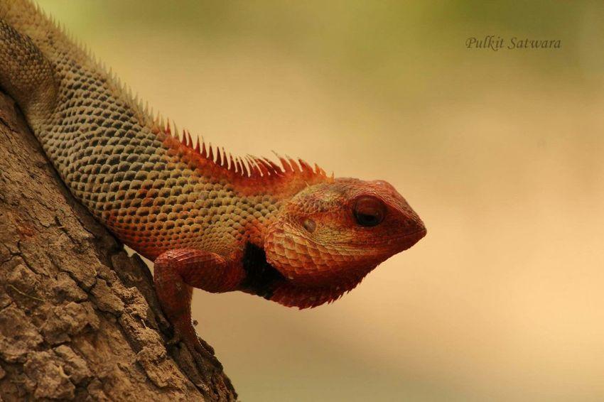 Check This Out Chameleons Tholbirdsanctuary Canon1200DPhotography Eyemphotography DSLR Photography Colors Close-up