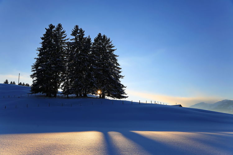 Tree on snow covered field against clear blue sky