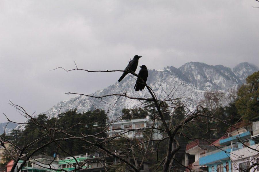 Incredible India Dharamshala Snow India Himalayan Mountains Internship