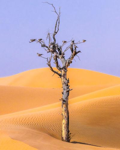 birds on a die tree in the desert Sand Dune Tree Desert Arid Climate Bare Tree Sand Sky Landscape