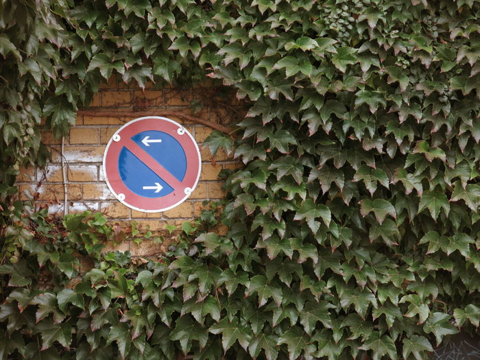 No entry sign on wall covered with ivy