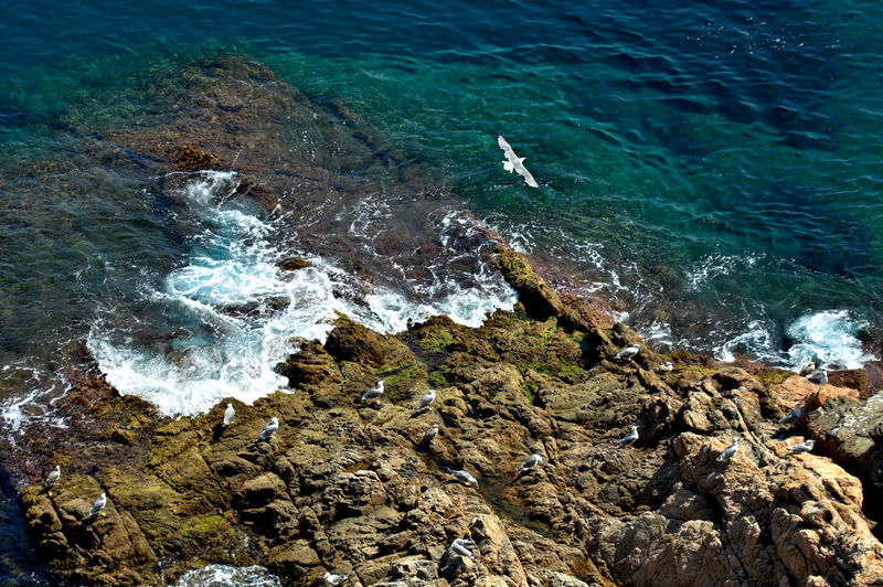 High angle view of seagull flying over sea shore