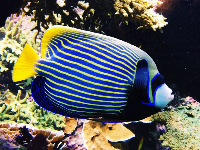 First Eyeem Photo Hello World Nature Fish Tropical Tropical Fish Acuarium Colors Animals Plants Underwater Water Blue IPhoneography Iphonephotography Travel Travel Photography My Favorite Photo Vscocam VSCO Nature's Diversities