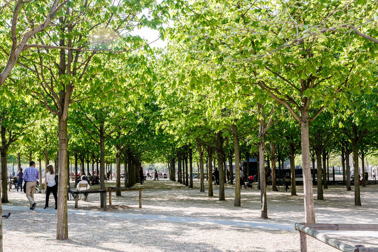 Branch City Day Garden, Green Color Le Jardin Du Luxembourg Nature Outdoors Palm Tree Park - Man Made Space People Sidewalk Sky Street Tree