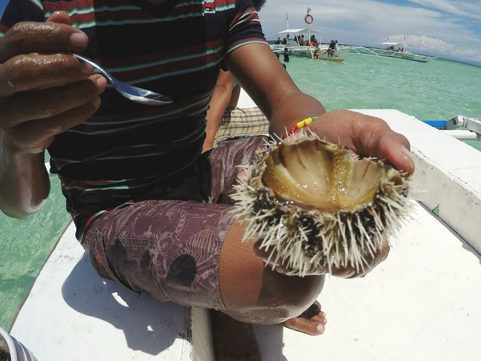 Low section of man holding sea urchin at beach