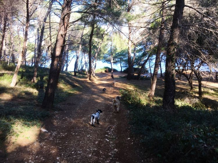 Taking the dogs for a walk Dog Walking Forest Walk Distant Sea Tree Domestic Animals Dog Animal Themes Nature Pets Day Forest Walking Outdoors