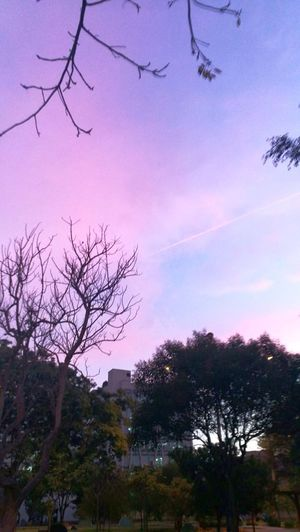 kind of looks like Kimi No Na Wa EyeEmNewHere Pink Nature Photography Evening Light Evening Sky Pink And Blue Nature Pokémon Go Park Park
