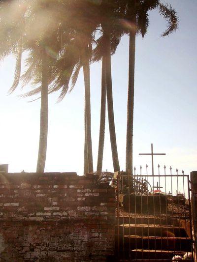 Tree Beach Architectural Column Palm Tree Sky Architecture