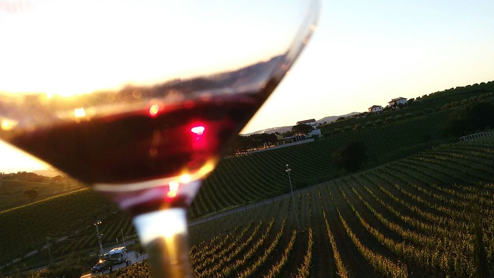 Wine Vines Glasswine Sunset Abruzzo - Italy Winehouse No People Outdoors Sky Day Close-up Nature Wine Not EyeEmNewHere