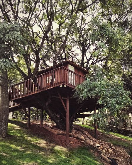 Tree House Nature Open Edit Architecture Saoroque